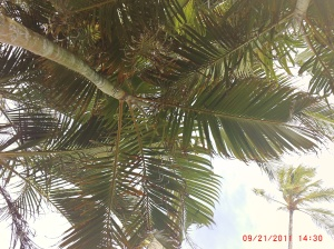 My Veridical View of Palms